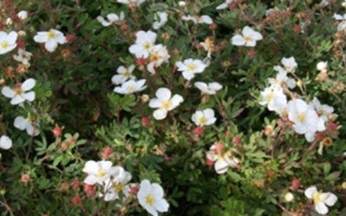 vivaio, fiori e piante bergamo