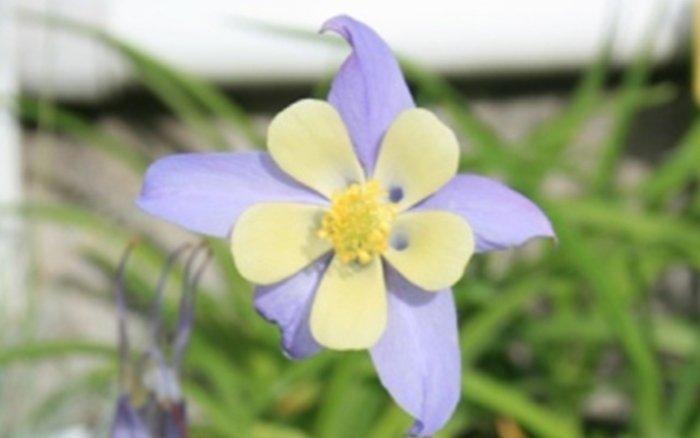 fiorista bergamo