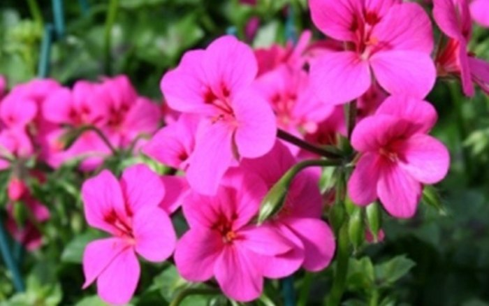la serra fiori e piante