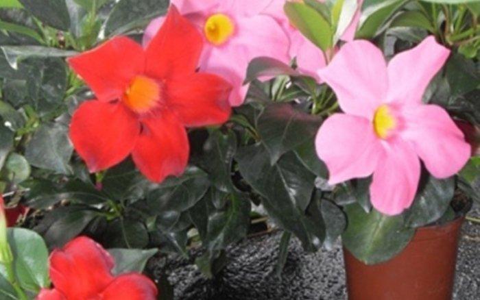 piante bergamo