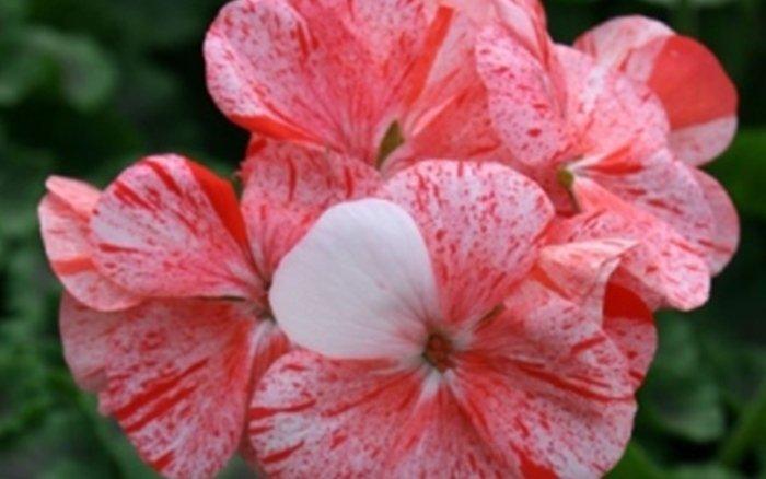 la serra calegari fiori e piante