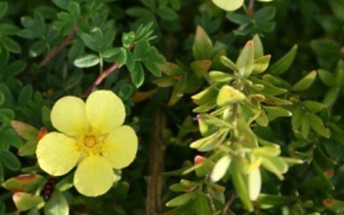 vendita fiori e piante clusone