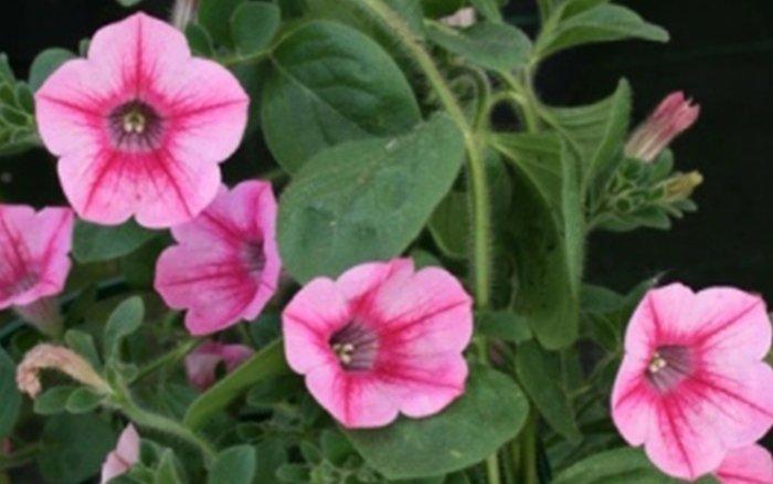 fiore e pianta