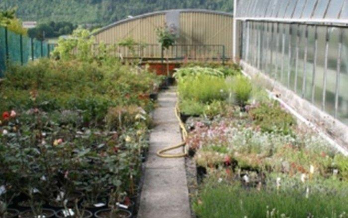 fiori e piante clusone
