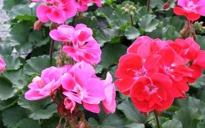 fiori e piante bergamo