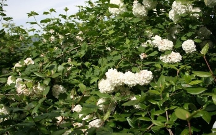 vendita fiori bergamo
