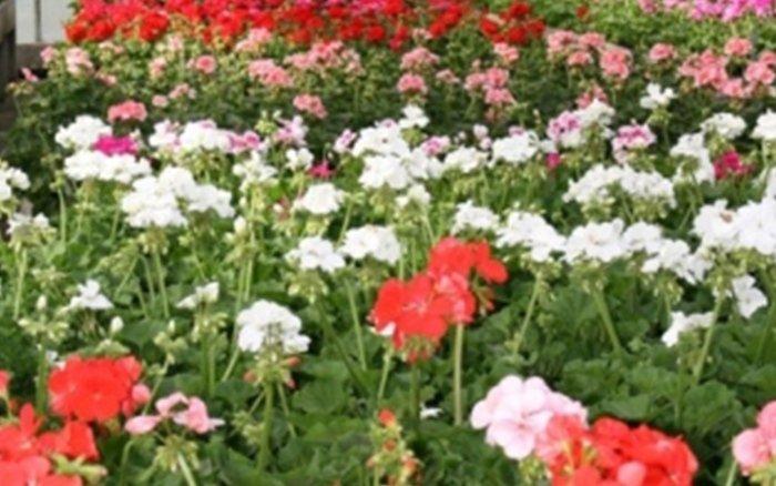 fiori e piante vivaio bergamo