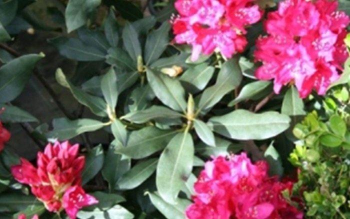 vendita fiori clusone