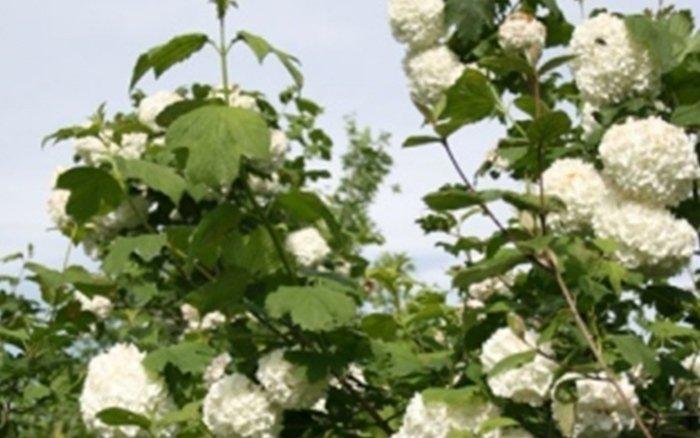 vendita diretta piante bergamo