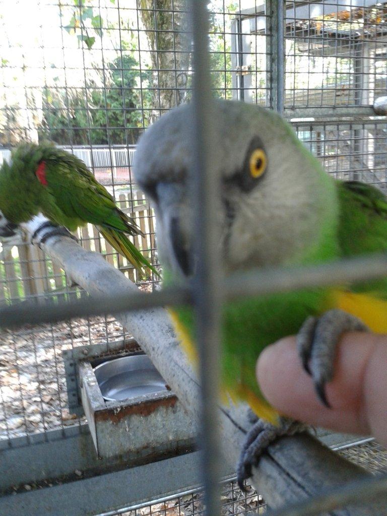 pensione per pappagalli