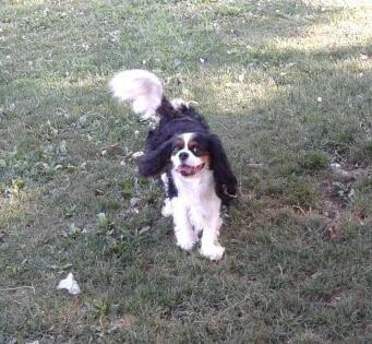 pensione per cani