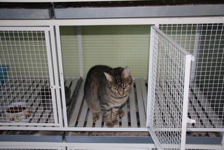 pensione per gatti giaveno