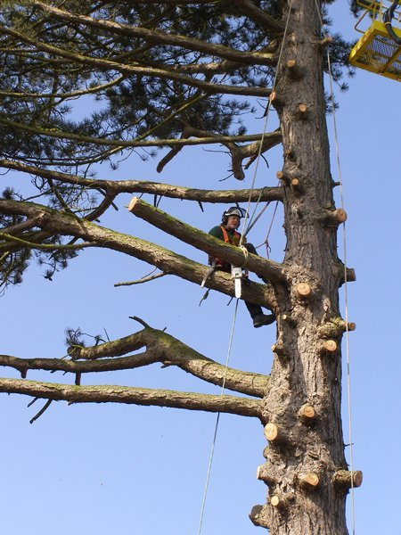 tree cutting service