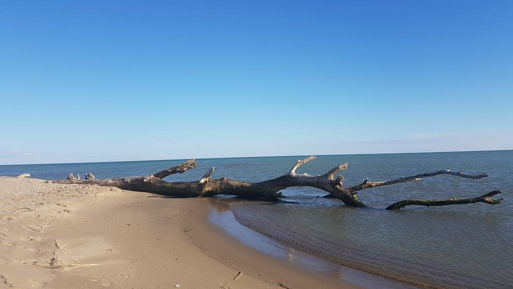 ramo di un albero in mare