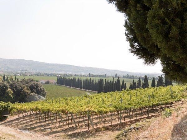 campi vinicoli
