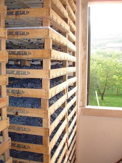 pila di casse di uva dell`azienda agricola Begali