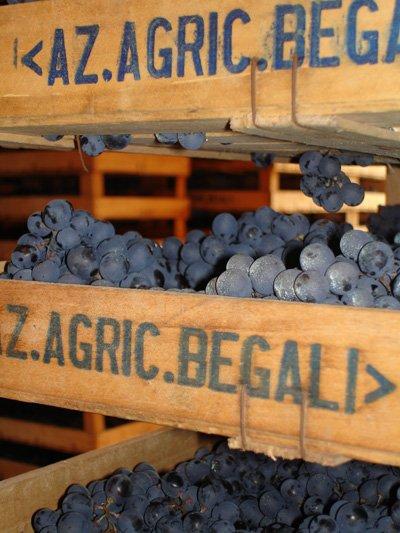 casse di uva con insegna Az. Agricola Begali