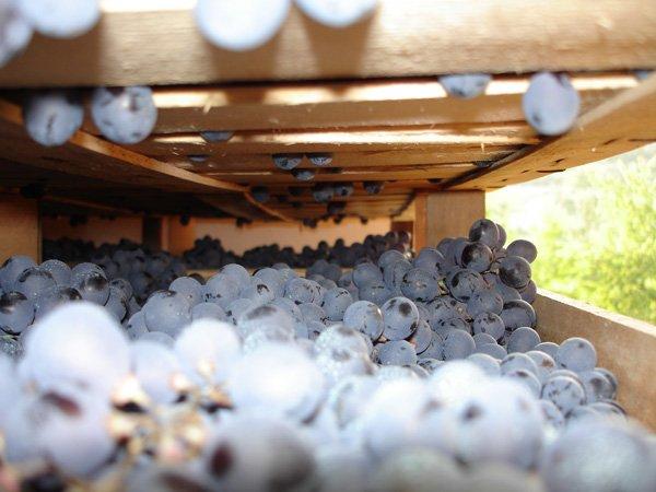 pallet pieni di uva da macinare
