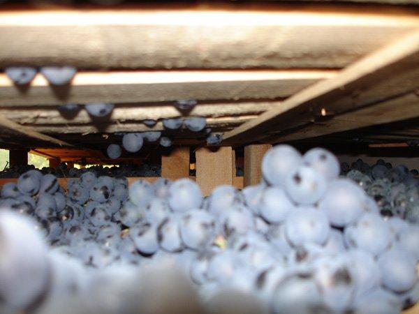 grappoli di uva nelle casse