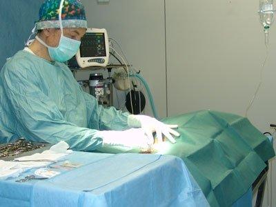 Chirurgica animali