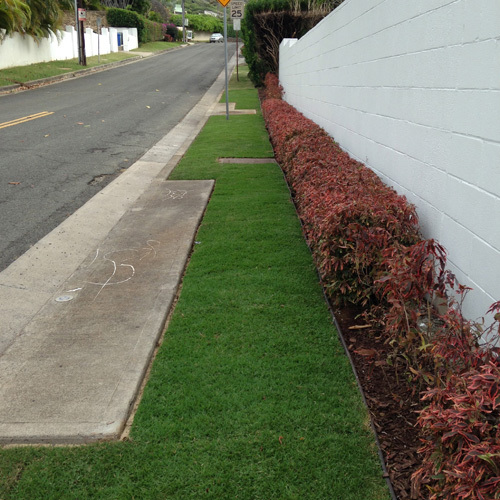 Fantastic landscape design of a pathway with green grass and red flowers in Honolulu, HI