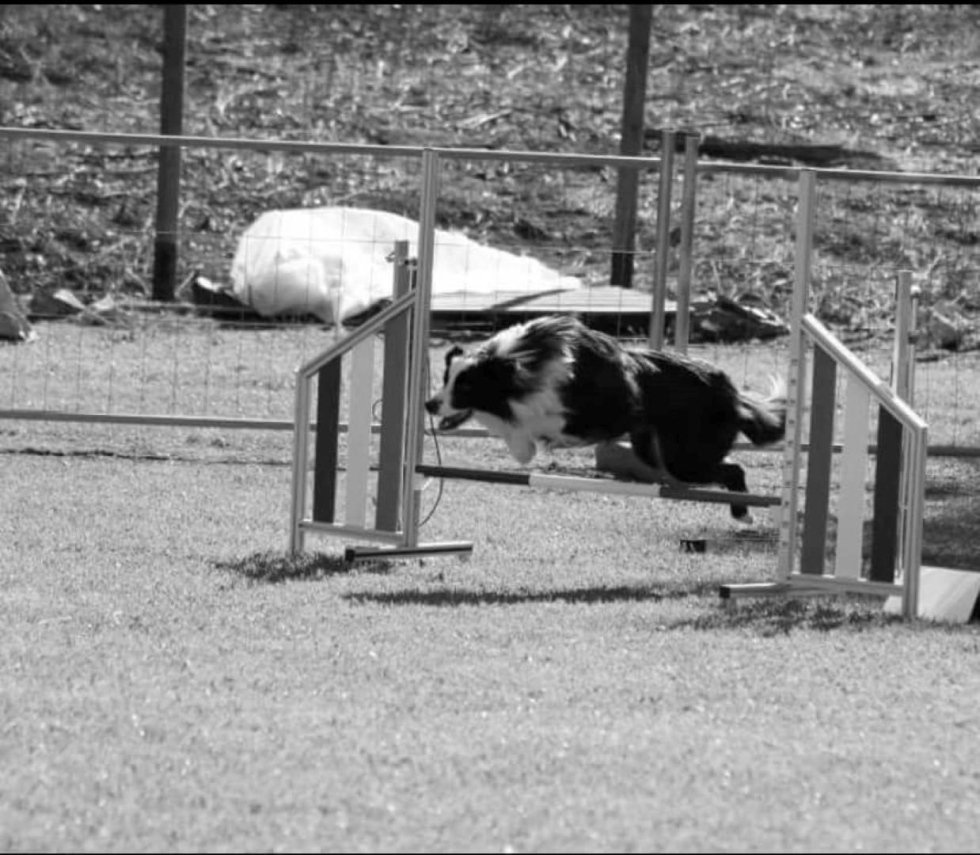 agility dog_addestramento cani
