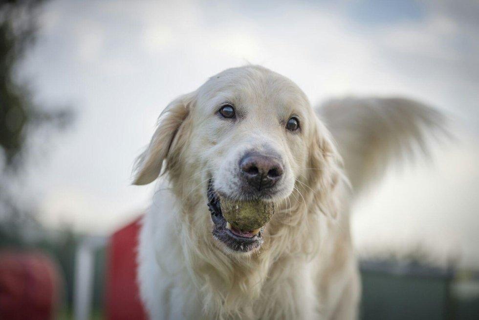 consulenza sul comportamento canino