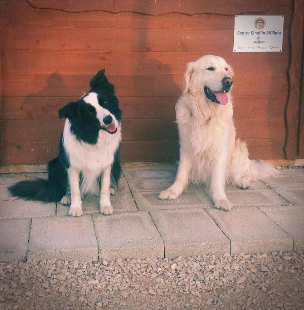 Corsi di educazione per cani