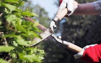 mani guantate taglio un cespuglio con le forbici indossati