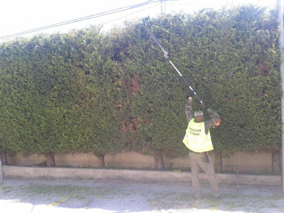 uomo taglio taglio degli alberi in più in Garde