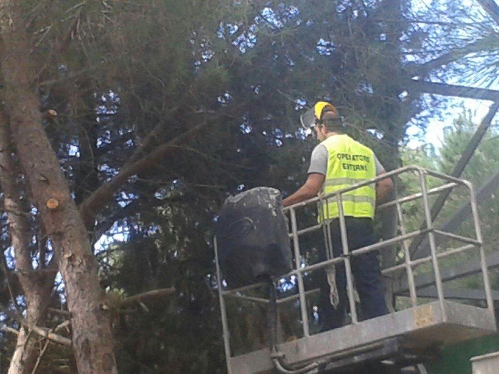 L'uomo sta tagliando un albero con una motosega