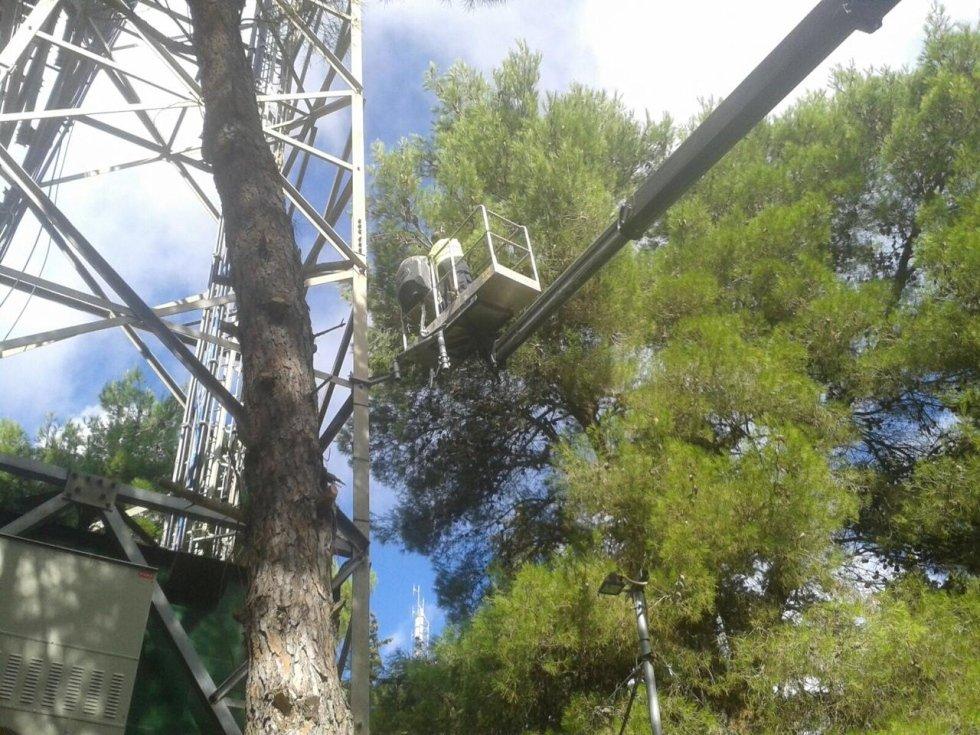 boscaiolo professionale taglia tronchi sulla cima di un grande albero con una motosega