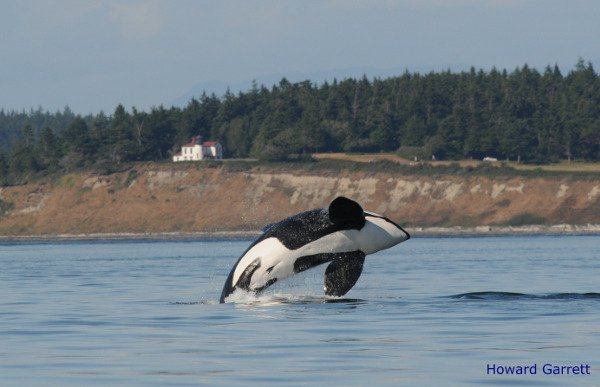 Orca Network on Whidbey Island.