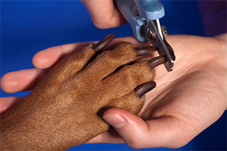 veterinary clinic Pensacola, FL