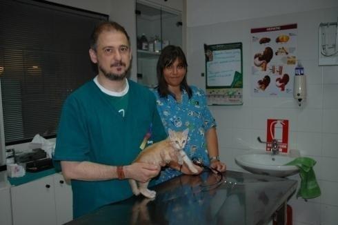 veterinario gatti