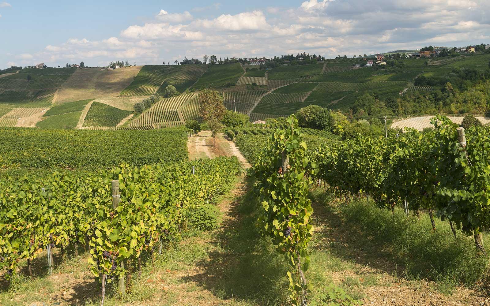 una collina con delle vigne