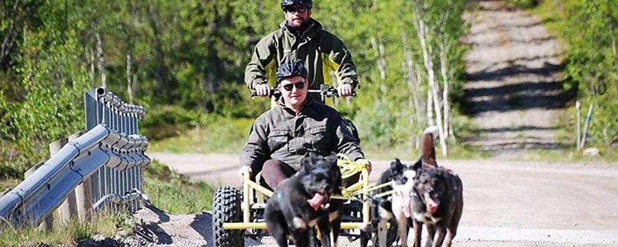 Hunder - Sjumilskogen booking Trysil