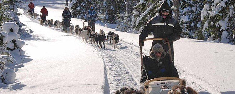 Aktiviteter - Hundespann Sjumilskogen booking Trysil