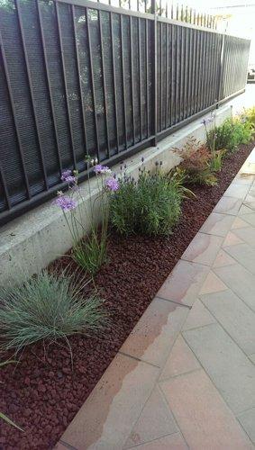 piante vicino a una recinzione