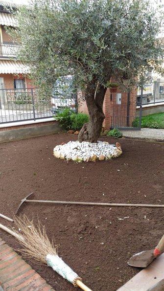 albero piantato con pala a terra