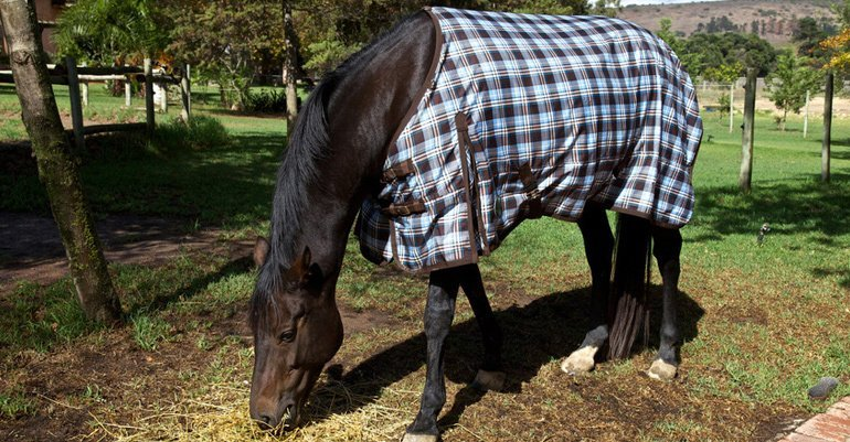 horse rug cleaning