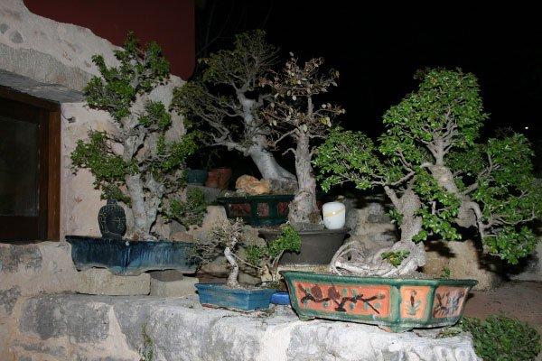 dei vasi appoggiati su un muretto in pietra con dentro delle piantine