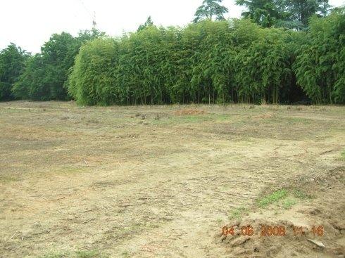 Un terreno vuoto e in fondo degli alberi