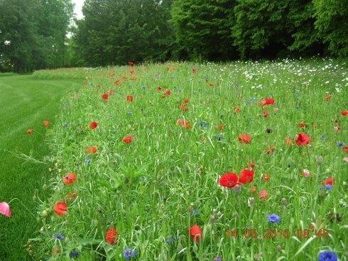 Un prato verde, sulla destra dei fiori e in fondo degli alberi