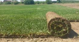 Una zolla di prato mentre viene srotolata sul terreno