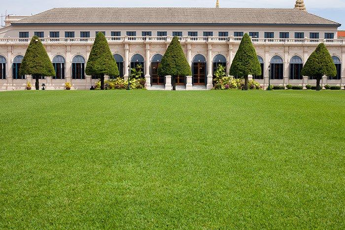 mown lawns