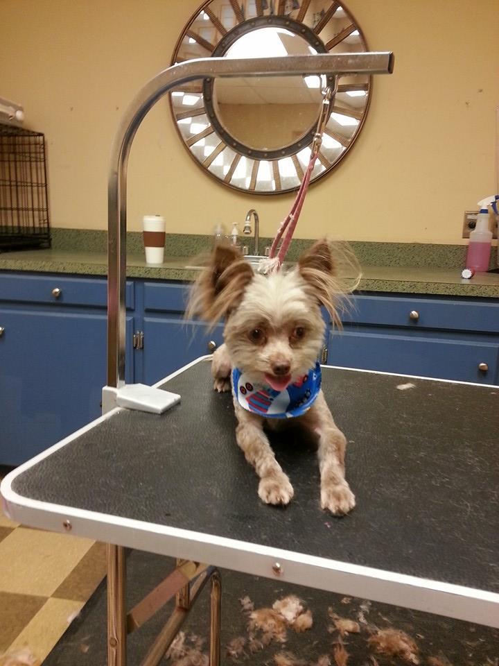pet grooming - Columbia, SC