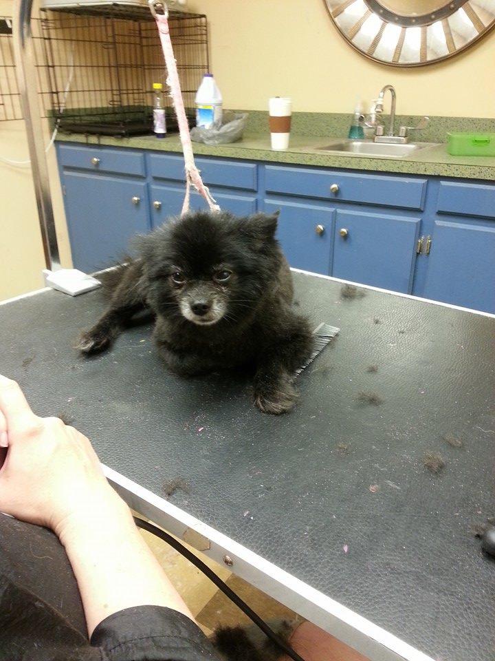 dog groomer - Columbia, SC