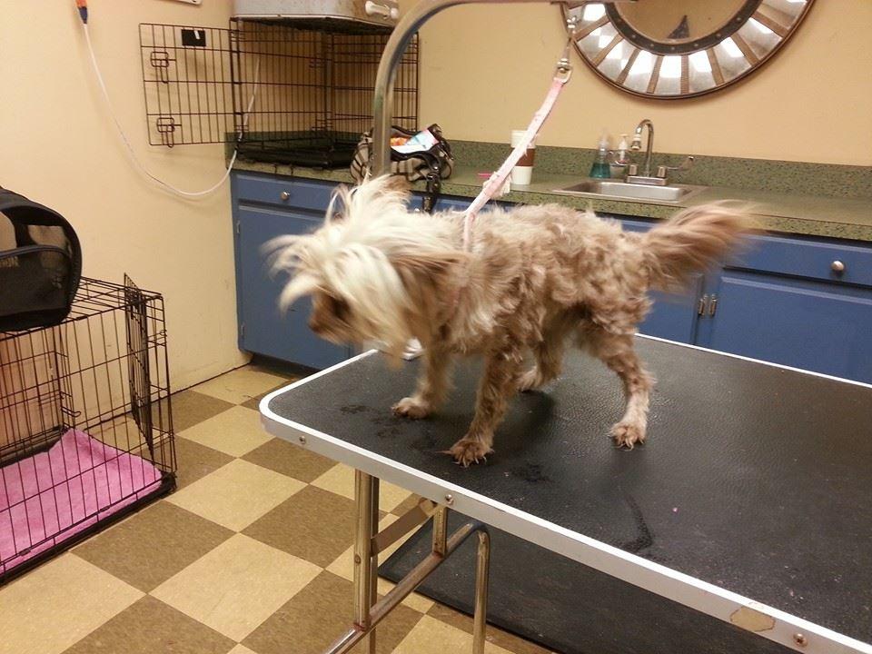 dog grooming - Columbia, SC