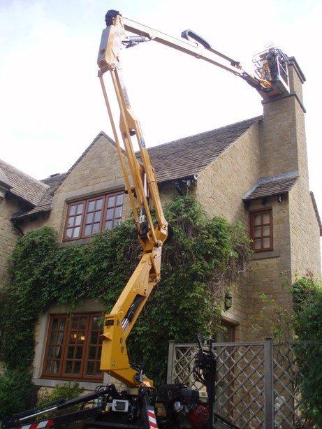 Removing a birds nest - Oxford - Trees & Gardens Ltd